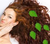 Лечение волос крапивой