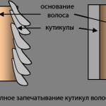 Биоламинирование