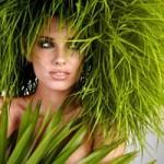 Справочник трав для волос и лица ( Приложение 1 )