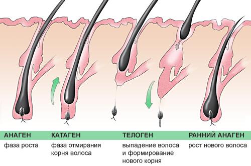 Почему пучками выпадают волосы