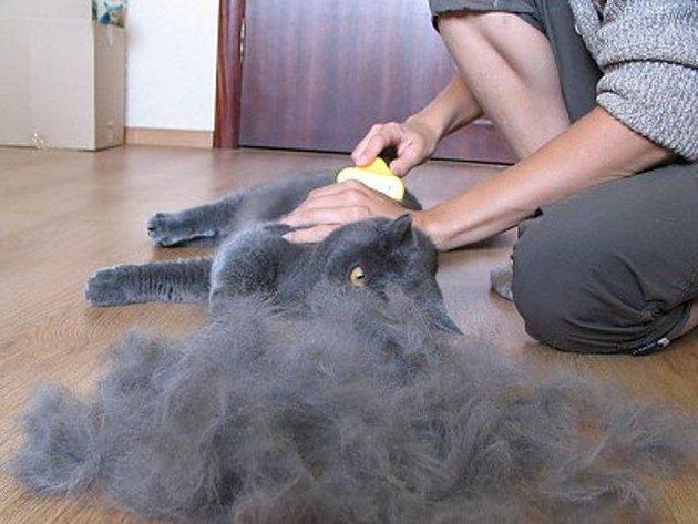 Выпадение волос у кошек причины