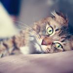 Выпадение волос у кошек всегда связано с кожными проблемами