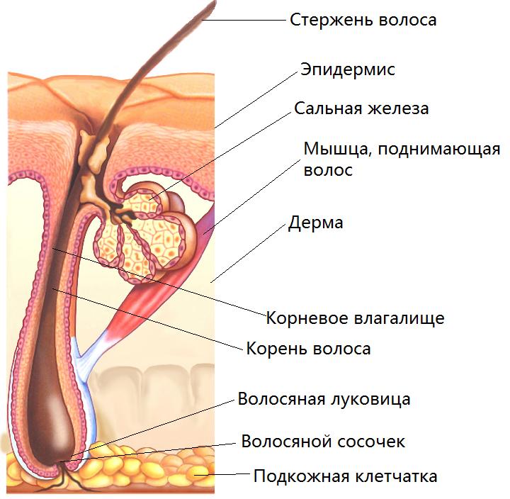 glubina-matki-vlagalishe