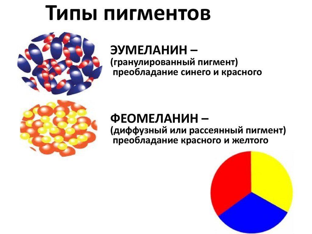 Типы пигментов