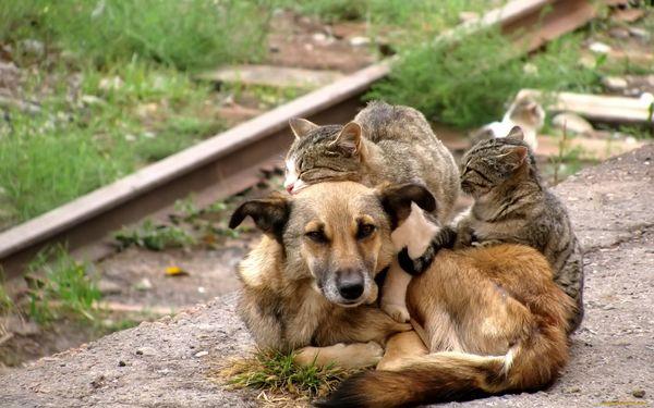 бродячие животные